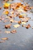 秋天地面叶子雨 库存图片