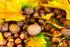 秋天地面 免版税库存图片