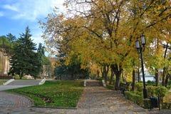 秋天场面在有落的金黄叶子的一个公园 库存照片