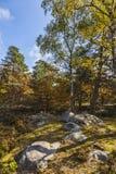 秋天场面在枫丹白露森林里 库存照片