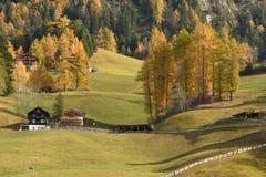 秋天场面在Val二Funes 秋天秋天森林路径季节 bolzano意大利 库存照片