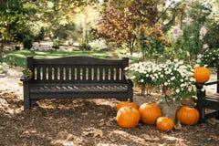 秋天场面用南瓜和长凳 库存照片