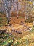 秋天场面 秋天 树和叶子在太阳光 免版税库存图片