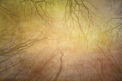 秋天坏的木纹理 库存图片
