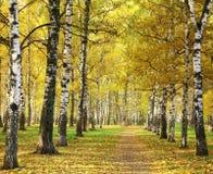 秋天城市公园在晴朗的早晨 免版税库存照片