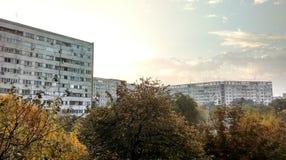 秋天城市安置叶子结构树黄色 库存图片