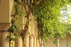 秋天城市安置叶子结构树黄色 免版税库存照片