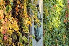 秋天城市安置叶子结构树黄色 库存照片