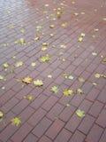 秋天城市秋天叶子路面 库存图片