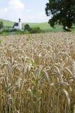 秋天域横向麦子 库存照片