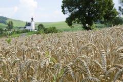 秋天域横向麦子 免版税库存图片