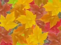秋天堆 免版税库存图片