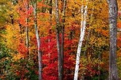 秋天壮观 库存图片