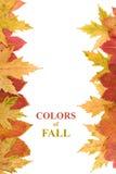 秋天复制构成的叶子空间 免版税库存图片