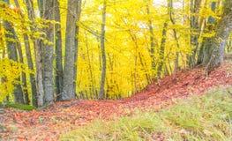 秋天多云山的森林 免版税库存图片