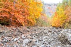 秋天多云山的森林 库存照片