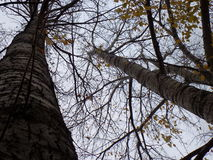 秋天多云的林木 图库摄影