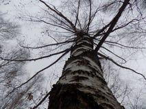秋天多云的林木 库存图片