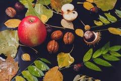 秋天多雨静物画-黄色离开,苹果,核桃,橡子 免版税图库摄影