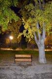 秋天夜公园胡同视域 免版税图库摄影