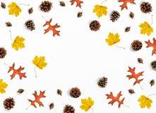 秋天大模型场面 创造性的秋天构成由五颜六色的槭树、橡木叶子、杉木锥体和橡子,平的位置制成 免版税库存照片