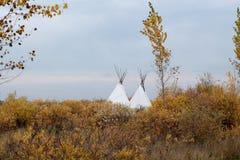 秋天大草原、树和帐篷 库存图片