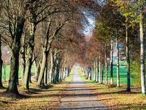 秋天大道的图象与叶子和太阳亮光的 库存图片