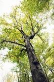 秋天大结构树 库存照片