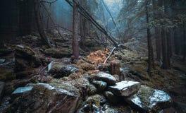 秋天天到森林里 免版税库存照片