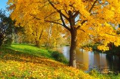 秋天天在公园 免版税库存图片