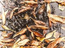 秋天天气在城市 栗子和下落的叶子 免版税库存照片