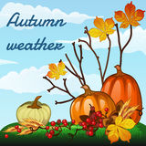 秋天天气,收获南瓜和凋枯 免版税库存图片