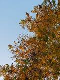 秋天天空树 免版税库存照片