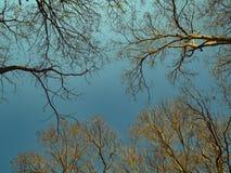 秋天天空背景概念 没有叶子的树在日落时间 免版税图库摄影