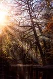 秋天太阳光芒光束看上去trought美好的树枝,并且叶子在城市停放与前面的一个池塘  免版税库存图片