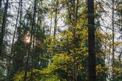 秋天太阳发光与通过树 免版税库存照片