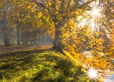 秋天太阳在公园, photomanipulation 免版税库存图片