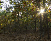 秋天太阳火光在森林里 免版税库存图片