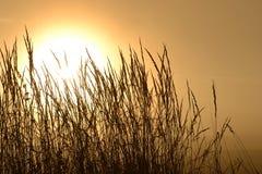 秋天太阳 库存照片