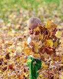 秋天婴儿叶子使用 免版税库存照片