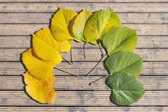 秋天季节上色了槭树在木头的叶子转折 库存照片