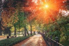 秋天季节公园令人惊讶的风景  发光与一些作用在公园的早晨 Wrocla 免版税库存照片