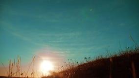 秋天季节剪影风景干燥棕色草和生长在豪华的金黄草甸的草本高灌木在风 影视素材