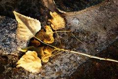 秋天季节和平安的概念 在石头的橙色叶子 免版税库存图片