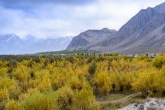 秋天季节在巴基斯坦 免版税库存照片