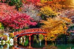秋天季节在日本,美丽的秋天公园 库存图片