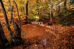 秋天季节在河和森林 库存照片