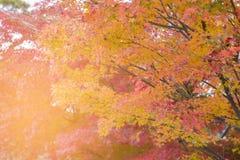 秋天季节多棵颜色树 免版税图库摄影