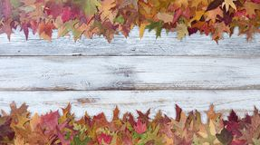 秋天季节性叶子装饰顶面和底下边界  免版税库存图片