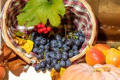 秋天季节性果子收获 免版税库存图片